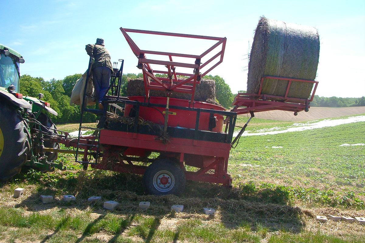 Erdbeeranbau in Mecklenburg