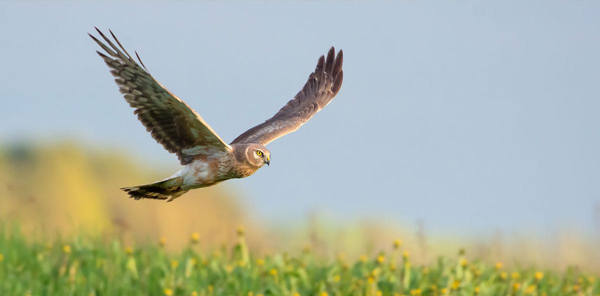 Lebensraum für Greifvögel